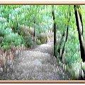 W lesie nad jez. Otomino #namalowane #obrazy #las #widok #droga