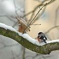 #ptaki #gile