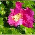 Rosa Rugosa,malowana inaczej #malowane #przeróbki #inaczej #DzikaRóża #krzew