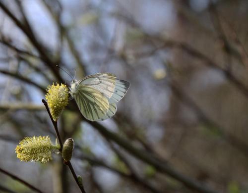 -wiosna przyszła-
