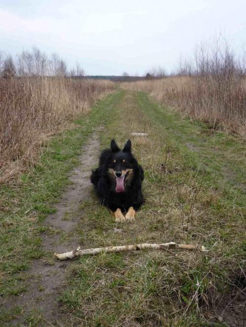 Chyba brak mi kondycji... #psy #zwierzęta