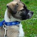 Toto na poważnie :)) #pies #kundelek #kundel #Toto #park #spacer #wrocław #wiosna #marzec #sony #misiek