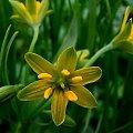 a takie kwiatki w Szczytnickim Parku... #kwiat #kwiaty #sony #misiek #marzec #wrocław #park